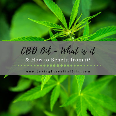 CBD Oil - What is it & How May YOU Benefit from it?