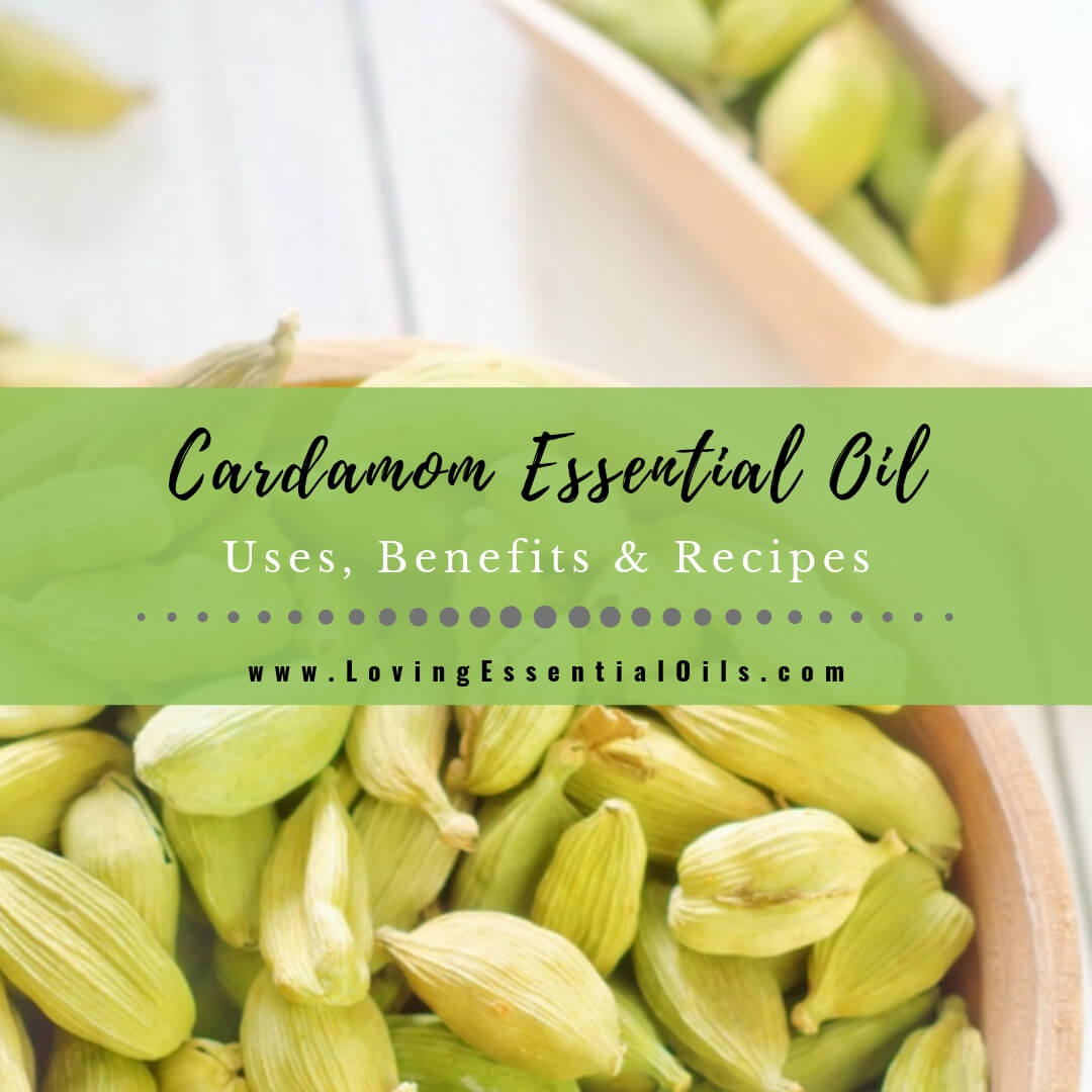 Cardamom Essential Oil Recipes, Uses and Benefits - EO Spotlight