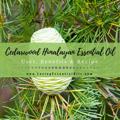 Cedarwood Himalayan Essential Oil Uses, Benefits & Recipes