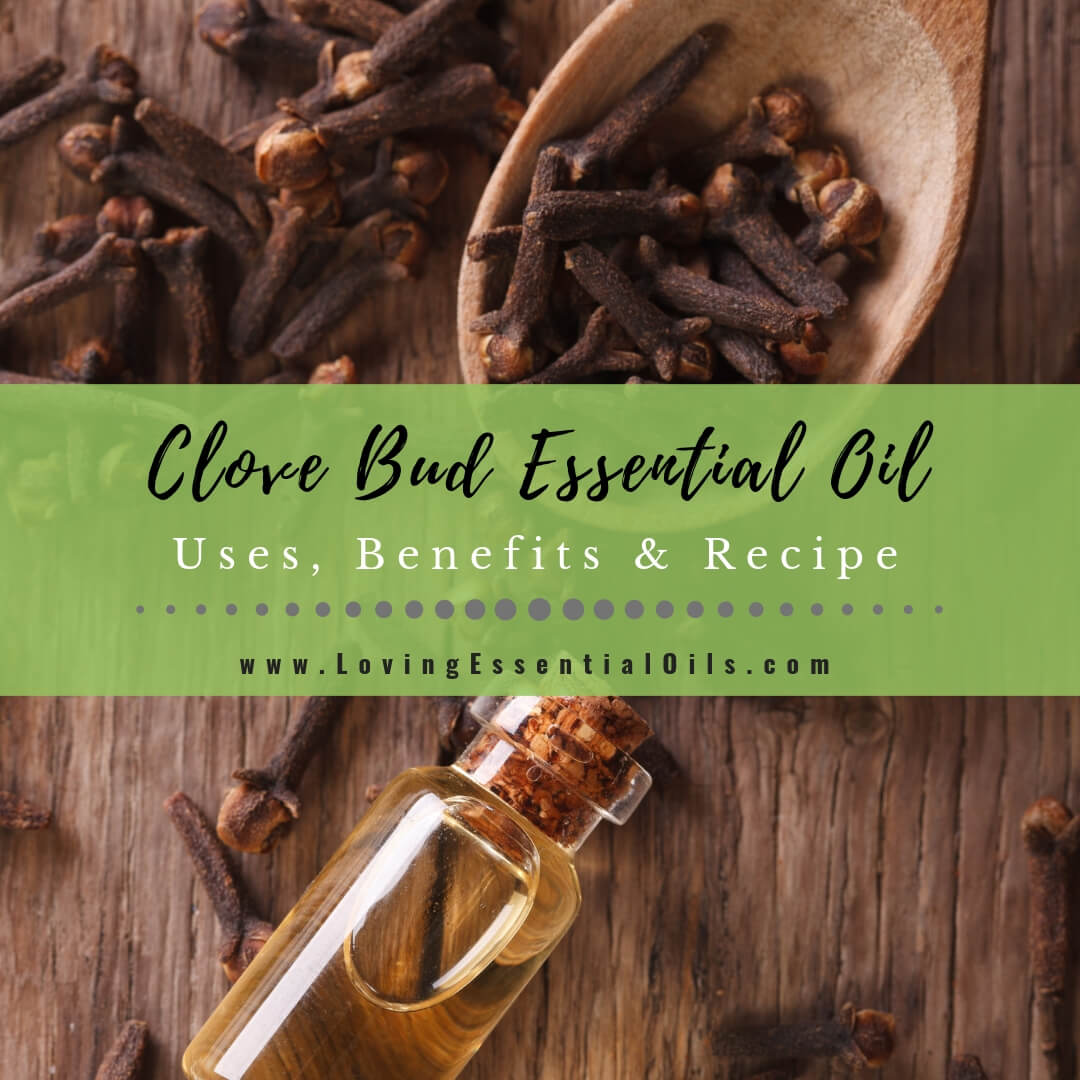 Clove Essential Oil Uses, Benefits & Recipes - EO Spotlight