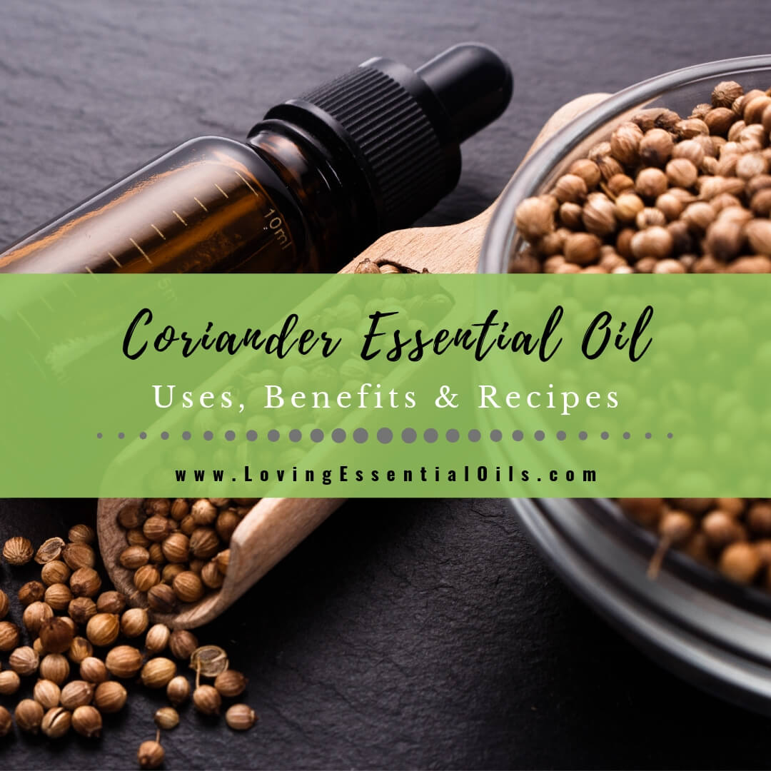 Coriander Essential Oils Uses, Benefits & Recipes - EO Spotlight