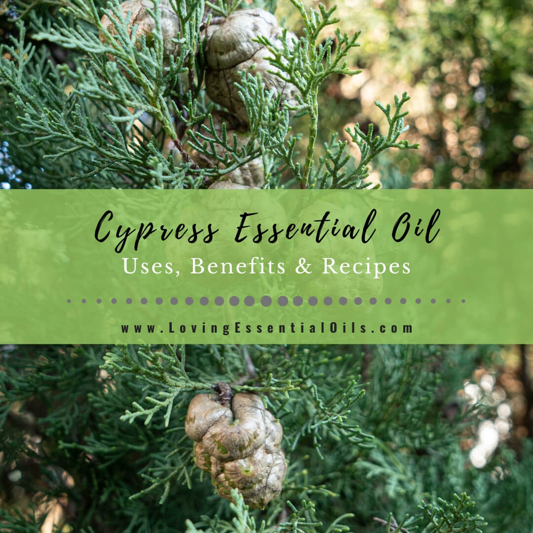 Cypress Essential Oil Recipes, Uses and Benefits - EO Spotlight