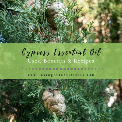 Cypress Essential Oil Recipes, Uses and Benefits Spotlight