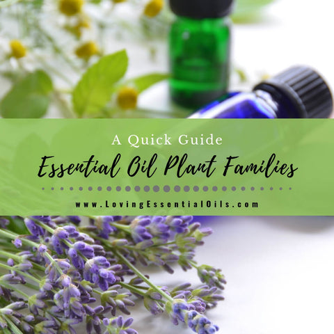 Essential Oil Plant Families - A Quick Guide with Cheat Sheets