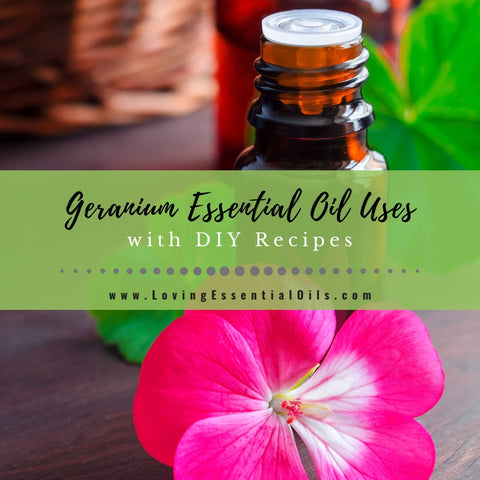 Geranium Essential Oil Recipes, Uses and Benefits - EO Spotlight