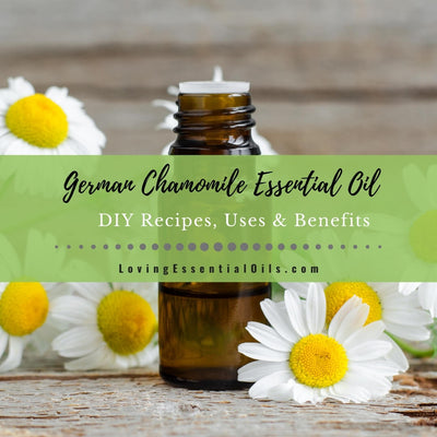 German Chamomile Essential Oil Recipes, Uses and Benefits