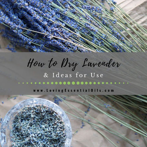 How to Dry Lavender & Ideas for Use