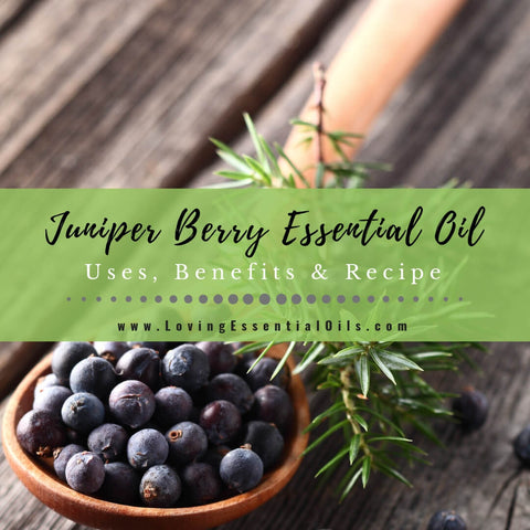 Juniper Berry Essential Oil Uses, Benefits & Recipes - EO Spotlight