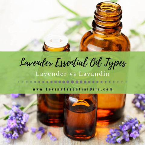 Lavender Essential Oil Types - Lavender vs Lavandin