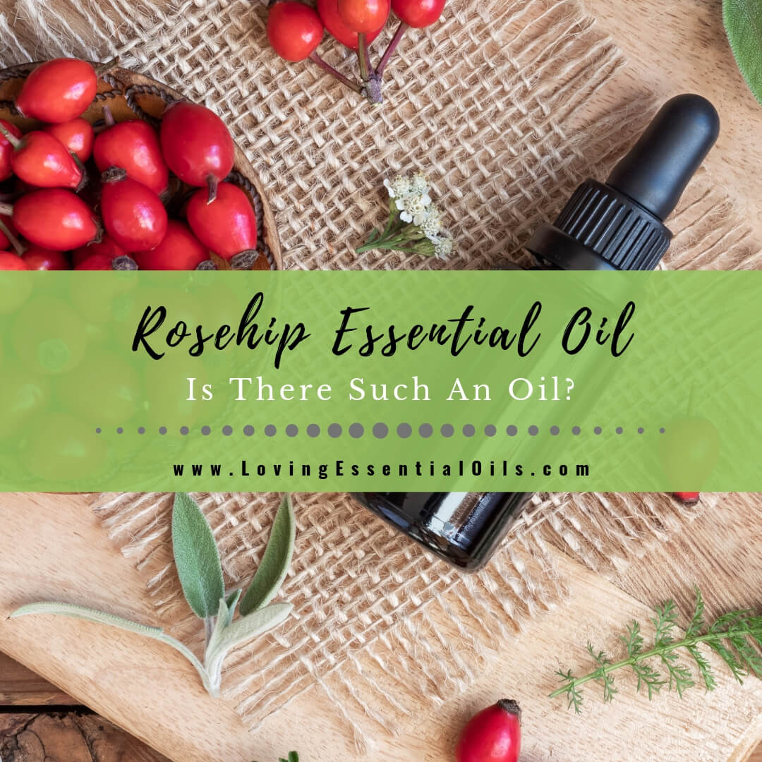 Rosehip Essential Oil - Is There Such An Oil?