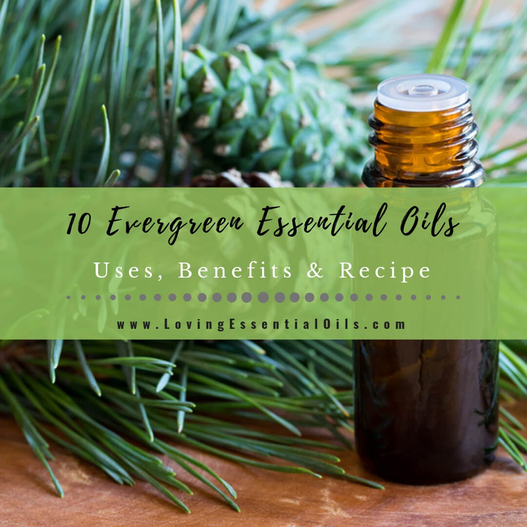 Top 10 Evergreen Essential Oils - Uses, Benefits & Diffuser Blends