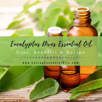 Eucalyptus Dives Uses, Benefits and Recipes - Peppermint Eucalyptus