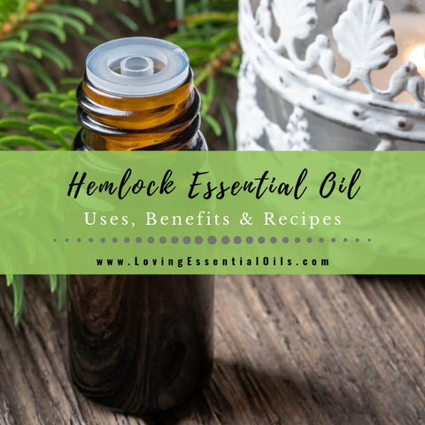 Hemlock Essential Oil Uses, Benefits & Recipes - EO Spotlight (Tsuga)