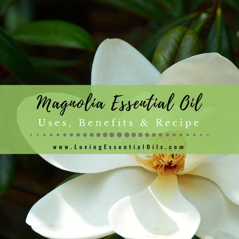 Magnolia Essential Oil Uses, Benefits & Recipes - EO Spotlight