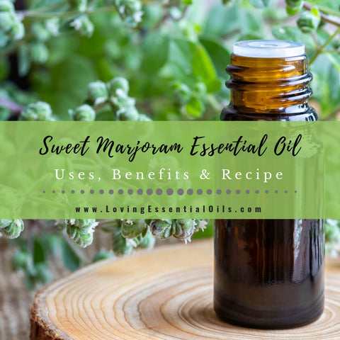 Sweet Marjoram Essential Oil Uses, Benefits & Recipes - EO Spotlight