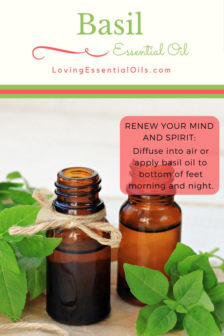 Basil Oil Renew Your Mind and Spirit