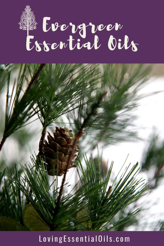 Best Evergreen Essential Oils with DIY Recipes & Blends by Loving Essential Oils