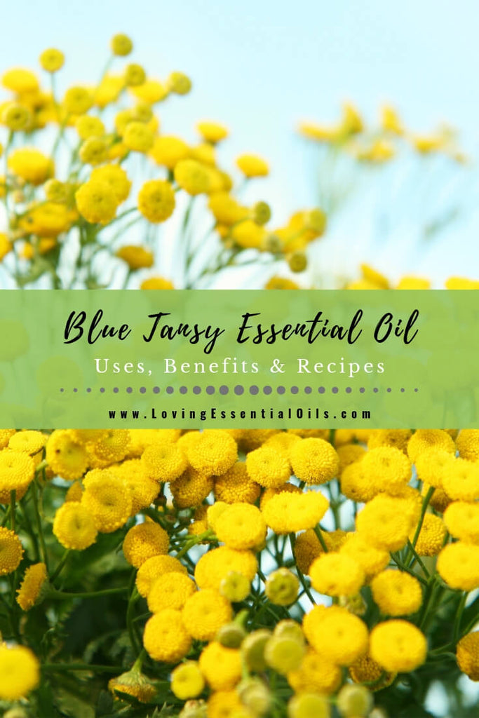 Blue Tansy Essential Oil Uses, Beneifts & Recipes - EO Spotlight by Loving Essential Oils