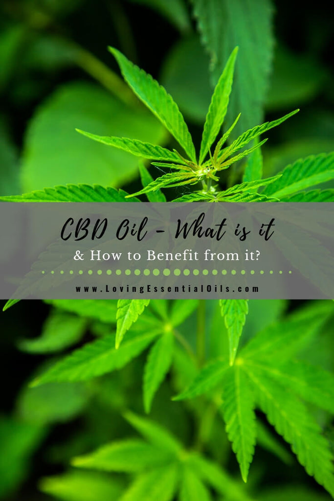 CBD Oil - What is it & How May YOU Benefit from it? by Melissa from Sweet Willow Spirit | Loving Essential Oils