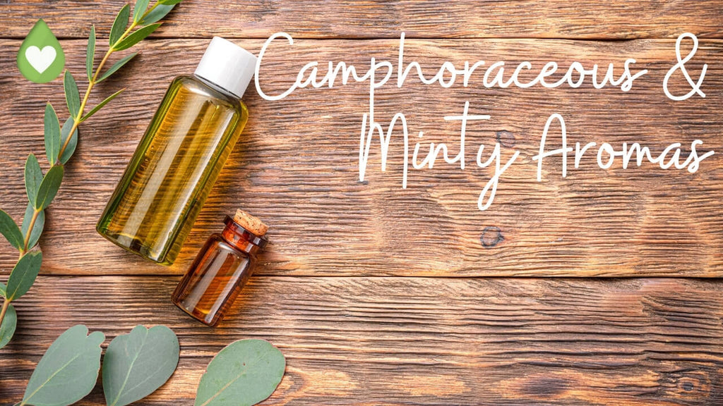 Mint and Camphoraceous Aromas with essential oil categories chart by Loving Essential Oils