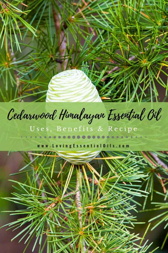 Cedarwood Himalayan Essential Oil Uses, Benefits & Recipes by Loving Essential Oils