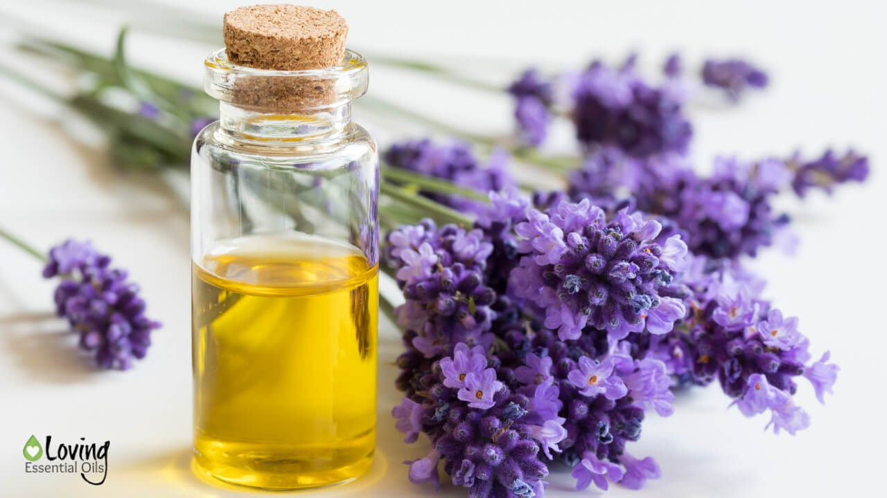 Carrier Oil vs Essential Oil - A Quick Guide by Loving Essential Oils
