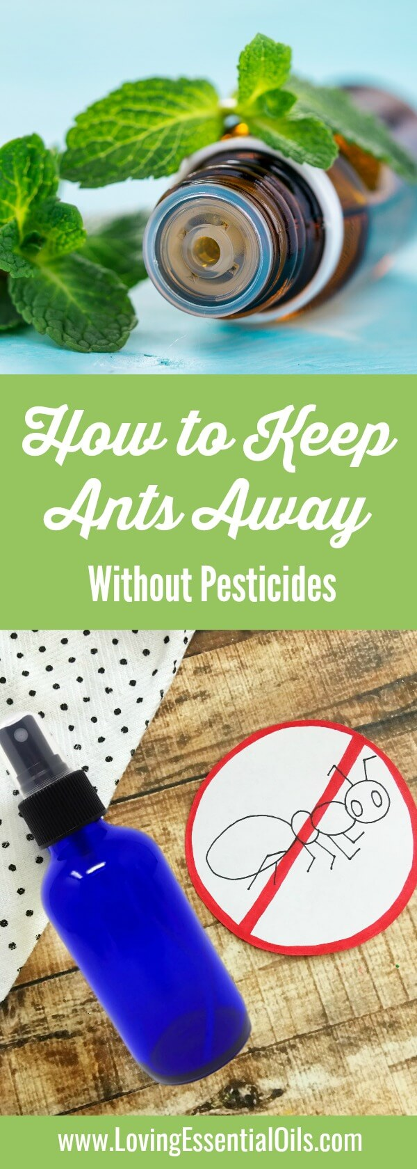 How to Keep Ants Away Without Pesticides Using Peppermit Essential Oil by Loving Essential Oils