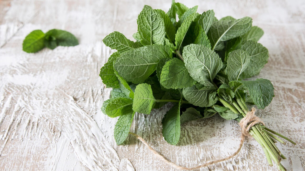 Spearmint Essential Oil Benefits by Loving Essential Oils