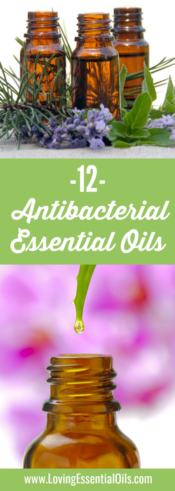 why are essential oils antibacterial
