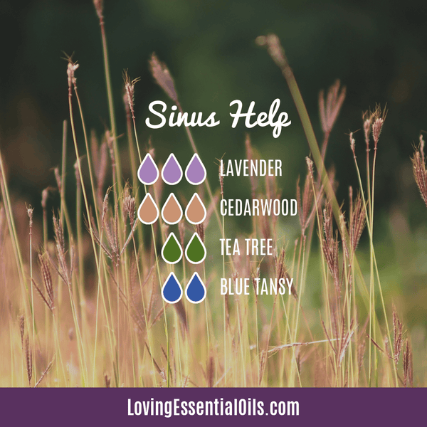 Allergy Diffuser Blends - Sinus Help by Loving Essential Oils with lavender, cedarwood, tea tree, and blue tansy