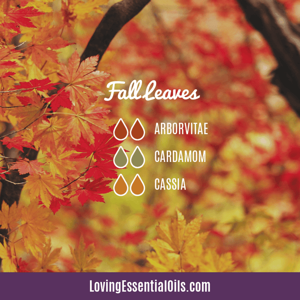Cassia Essential Oil Uses, Benefits & Recipes - EO Spotlight by Loving Essential Oils | Cassia Diffuser Blends Fall Leaves with arborvitae, cardamom, and cassia