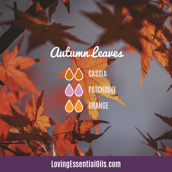 Cassia Essential Oil Uses, Benefits & Recipes - EO Spotlight by Loving Essential Oils | Cassia Diffuser Blends Autumn Leaves with cassia, patchouli, and orange