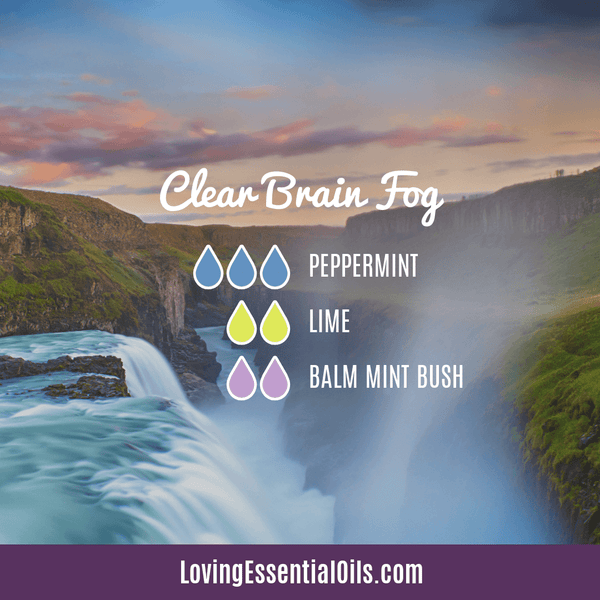 Clear brain fog blend with Balm Mint Bush  by Loving Essential Oils with peppermint and lime oil