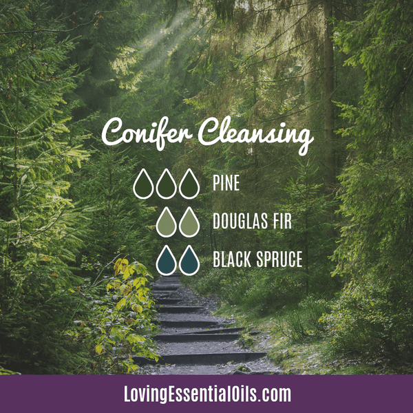 Conifer Diffuser Blend - Conifer Cleansing by Loving Essential Oils with pine, spruce and fir
