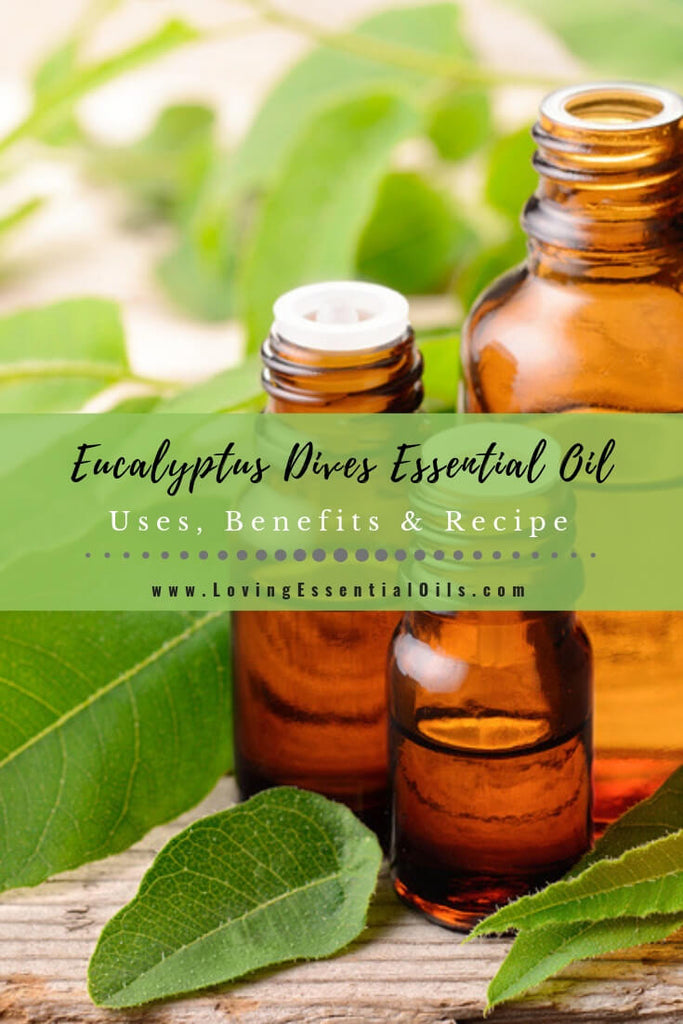 Eucalyptus Dives Uses, Benefits & Recipes (aka Peppermint Eucalyptus) - EO Spotlight by Loving Essential Oils