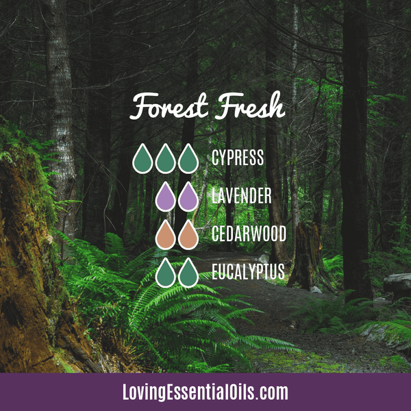 Eucalyptus Diffuser Blends - Relieve Fatigue & Open Airways! by Loving Essential Oils | Forest Fresh with cypress, lavender, cedarwood, and eucalyptus