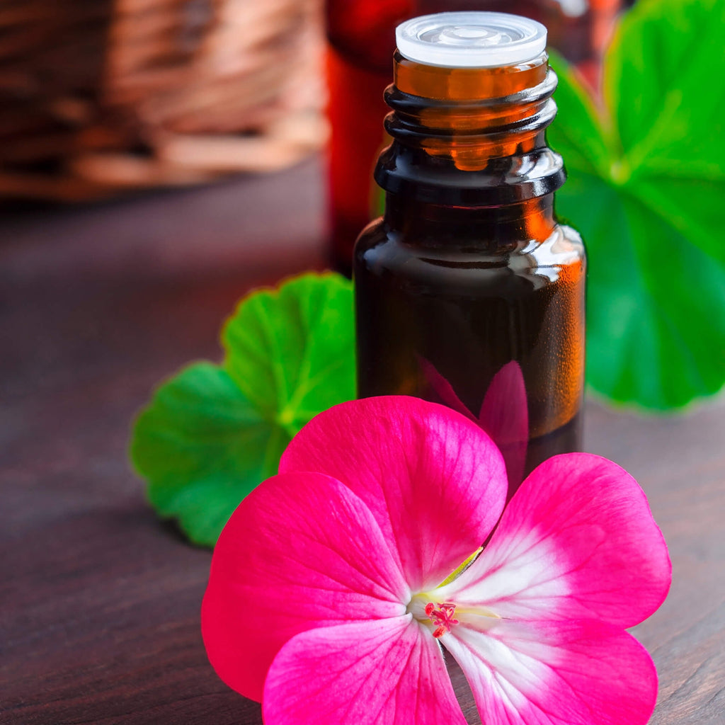 Geranium Essential Oil Facts - Spotlight & DIY Recipes by Loving Essential Oils