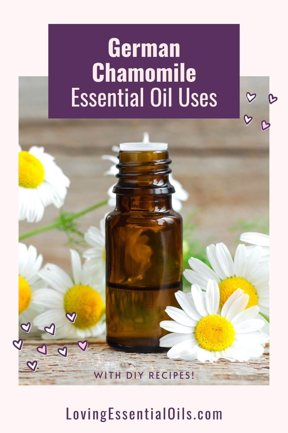 German Chamomile Essential Oil Uses and Benefits by Loving Essential Oils