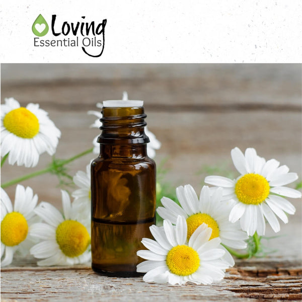 German Chamomile Essential Oil Benefits and Uses by Loving Essential Oils