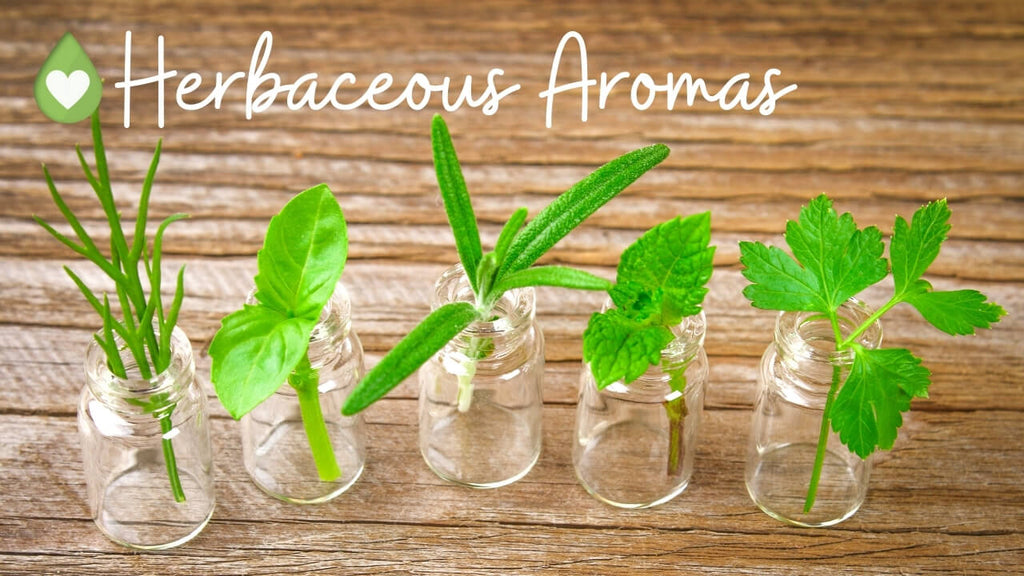 Herbaceous Aromas with essential oil category chart by Loving Essential Oils