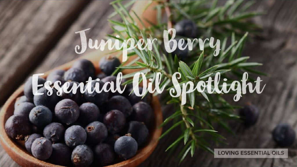 Juniper Berry Essential Oil Uses Benefits Recipes Eo Spotlight