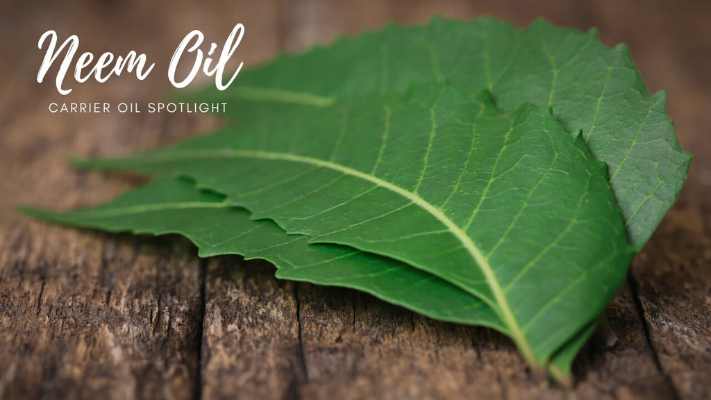 What Is Neem Oil? Carrier Oil Spotlight by Loving Essential Oils