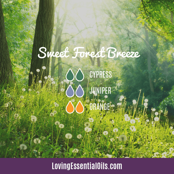Summer Oil Diffuser Blends by Loving Essential Oils | Sweet Forest Breeze Diffuser Blend with cypress, juniper, and orange essential oil