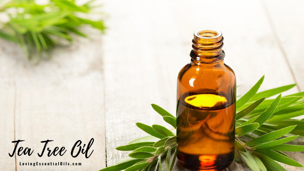 Tea Tree Essential Oil for Skin Tags with DIY Roller Blend Recipe by Loving Essential Oils
