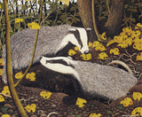 Pack of 4 Badgers Emerge Greeting Cards