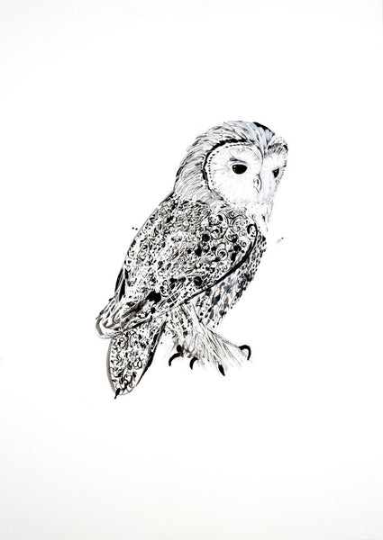 Little Owl by Marissa Weatherhead at The Prints Gallery.  One of a series of black and white prints of birds. £90.
