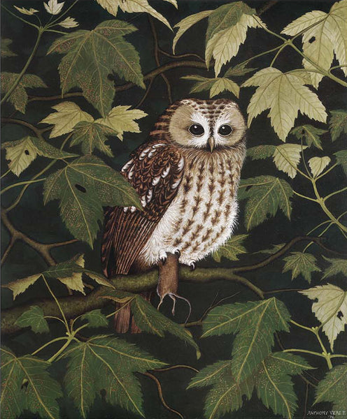 Pack of 4 Owl in the Sycamore Greeting Cards