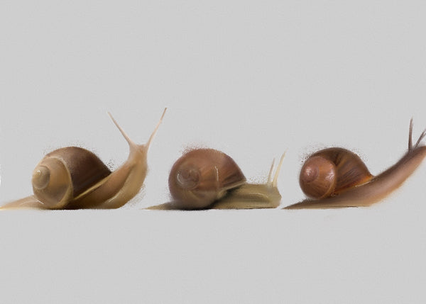 Giclee print depciting three snails by artist Amy Buik at The Prints Gallery. £40 excluding p&p