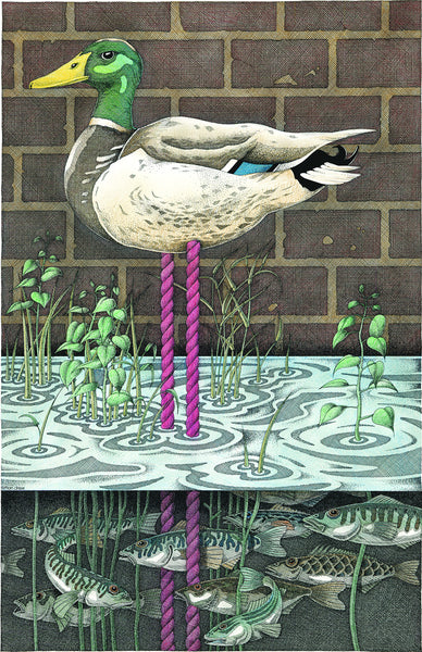 Duckpond - Giclee print by Simon Drew from £60 at The Prints Gallery