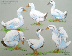 Five Ducks and a Goose - mounted Giclee print by artist Xanthe Mosley. £45 at The Prints gallery.